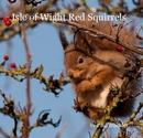 Isle of Wight Red Squirrels
