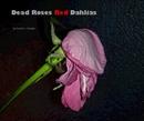 Dead Roses Red Dahlias