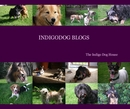 INDIGODOG BLOGS