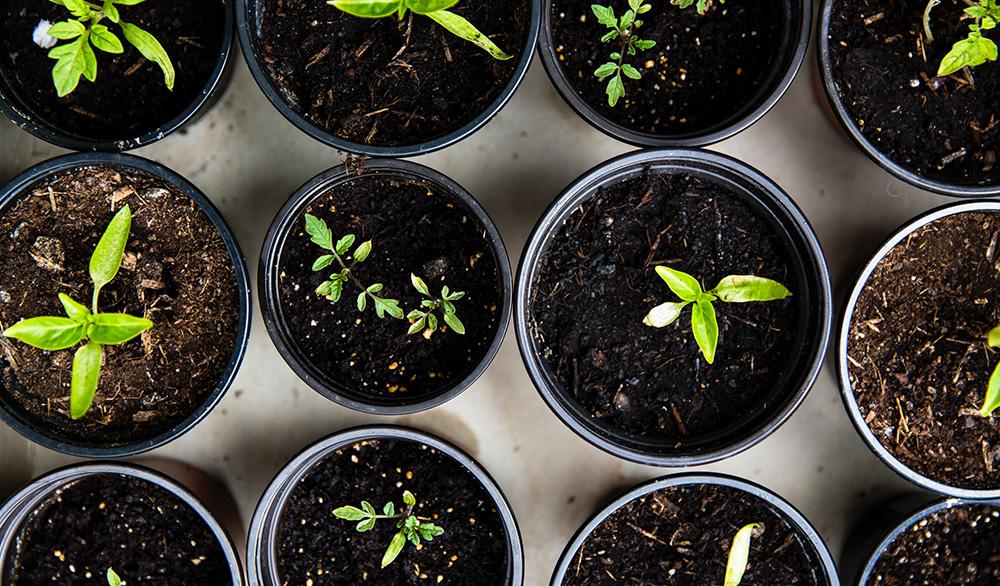 Make a magical mini garden