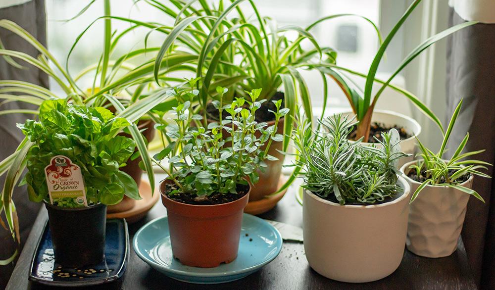 Start a Herb Garden or Flower Arrangement