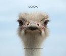 LOOK By Caroline Castendijk - Portfolios photo book
