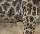 SOUTH AFRICAN SAFARIS - Travel photo book