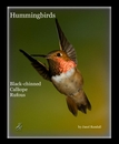Hummingbirds, as listed under Arts & Photography