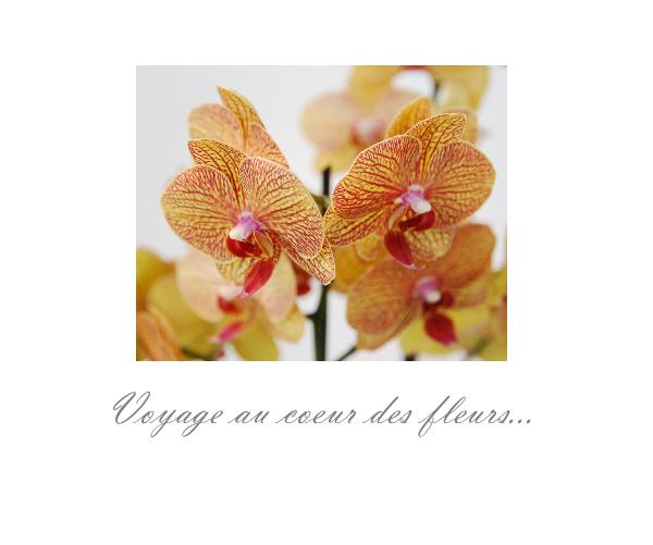 Voyage au coeur des fleurs...
