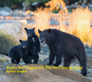 Bears And Eagles Of The Port Hardy Area - Arts & Photography photo book