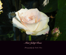Mint Julep Rose - Arts & Photography photo book
