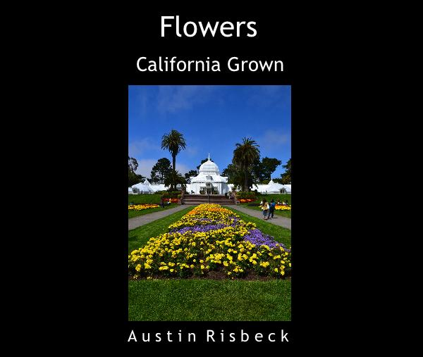 View Flowers by Austin Risbeck