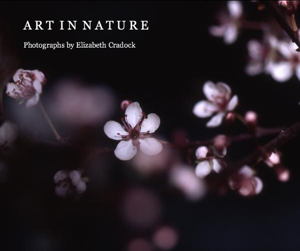 Fine Art Nature Photography Art in Nature by Elizabeth