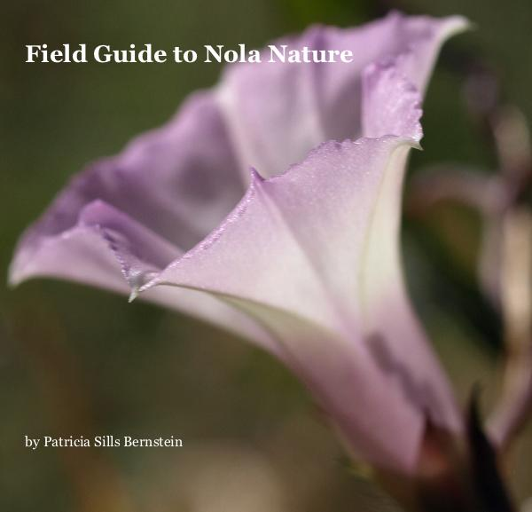 Field Guide to Nola Nature