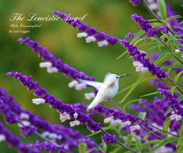 Click to preview The Leucistic Angel White Hummingbird By Lori Taggart photo book