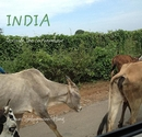 INDIA through the carwindow