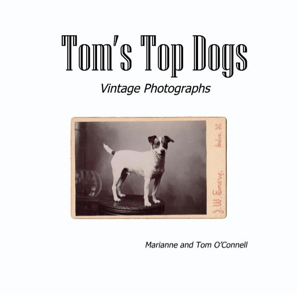 Tom's Top Dogs