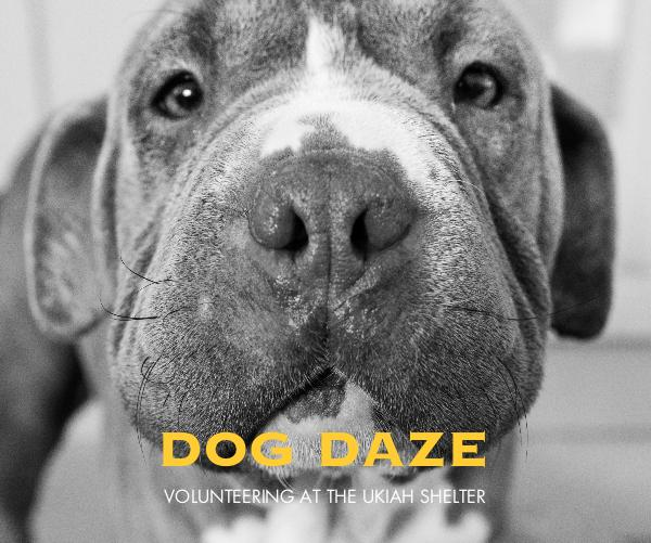 View DOG DAZE by ShelterDogs