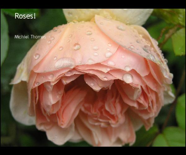 Click to preview Roses! photo book