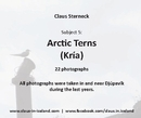 Subject 5: Arctic Tern (Kría) - Fine Art Photography photo book