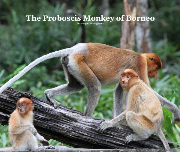 The Proboscis Monkey of Borneo by Mangini Photography