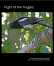 Flight of the Magpie - Poetry photo book