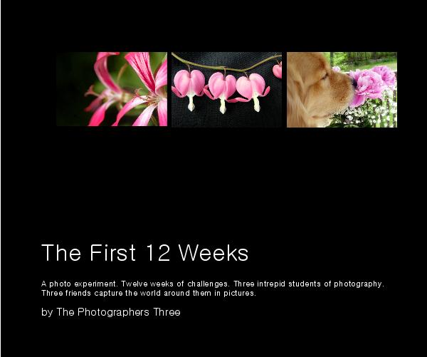 View The First 12 Weeks by The Photographers Three